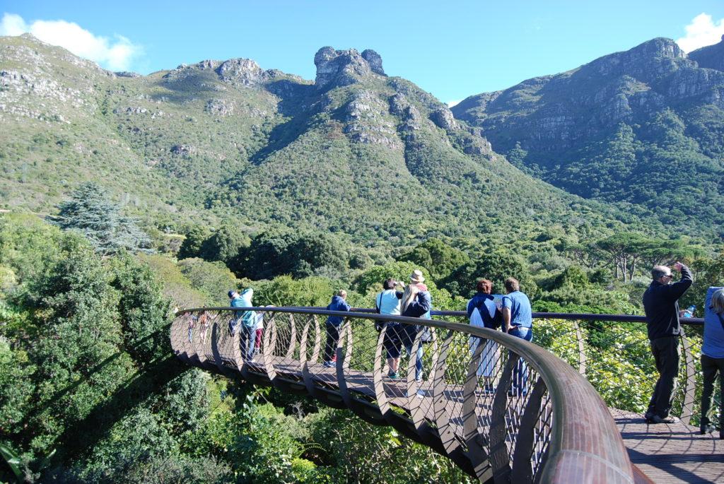 Boomslang Kirstenbosch Cape Town